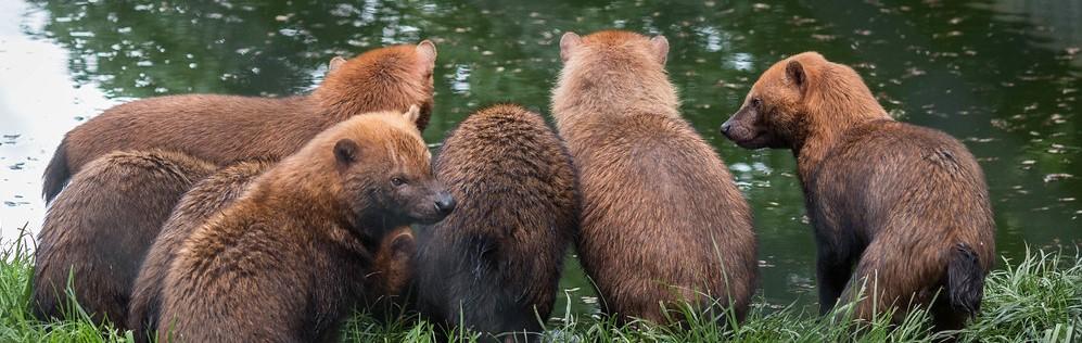animals thought extinct, species thought extinct, lazarus species