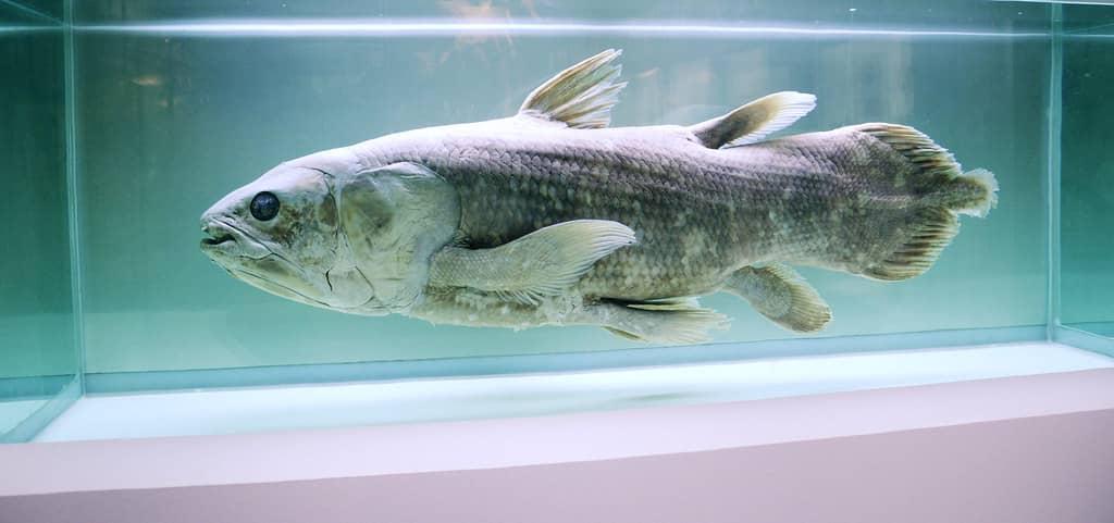 A fish in an aquarium