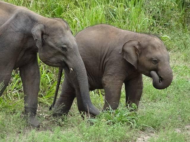 Two elephants grazing