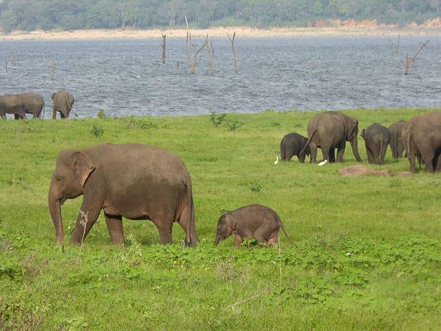 A herd of elephants roaming the vast grasslands
